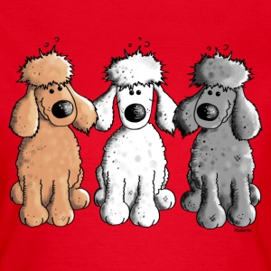 Three Funny Poodle - Dog - Dogs