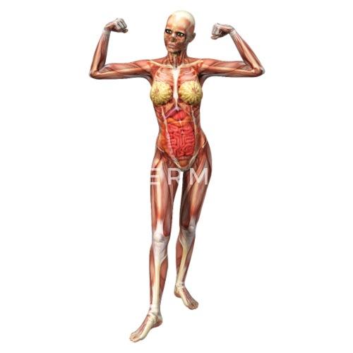 Mujeres anatomía por c.k.Olaf   Spreadshirt