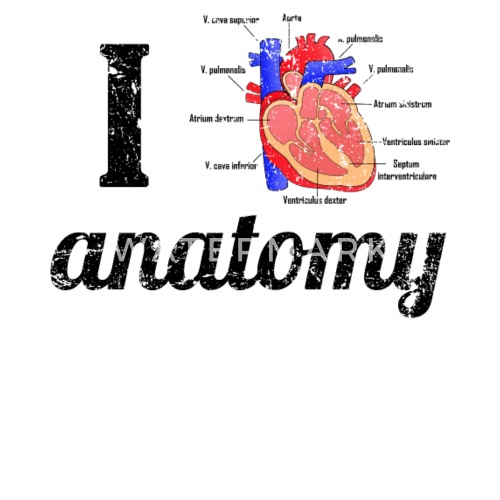 I love anatomy. Anatomical human heart by | Spreadshirt