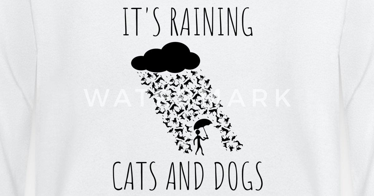 ccceb6d31339f Il pleut des chiens et des chats