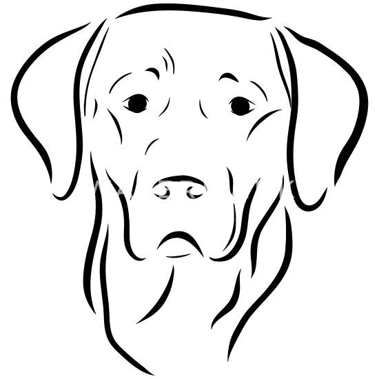 Labrador Chien Tete Dessin Chien Chien Amour Art Dessous De Verre