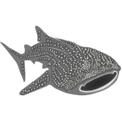 whale shark fish dive diver diving endangered species