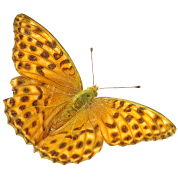 Caged keiser jakke sommerfugl Bamse | Spreadshirt