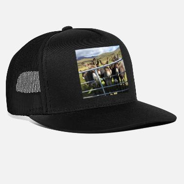 Donkey Donkeys in Ireland - Trucker Cap