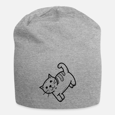 Domestic Cat domestic cat - Beanie