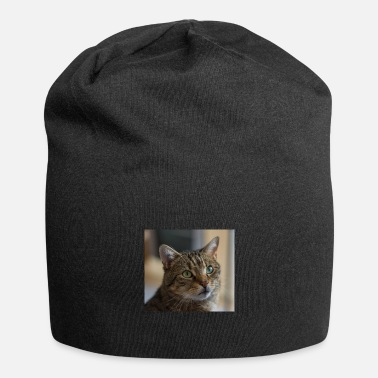 Male Cat Male cat - Beanie
