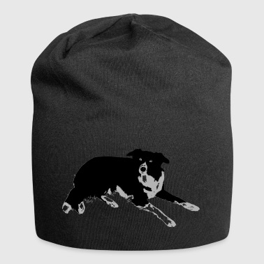 Border Collie - Jerseymössa