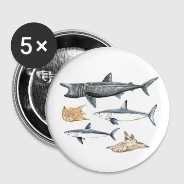 Haaien - Haaien - Requins - Buttons klein 25 mm