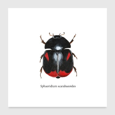 water beetle - Poster 24 x 24 (60x60 cm)