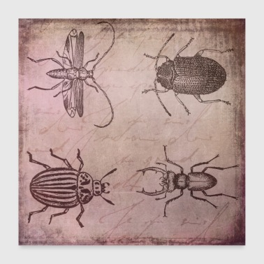 Beetle illustration vintage - Poster 60 x 60 cm