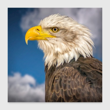 Eagle Head - Poster 60 x 60 cm