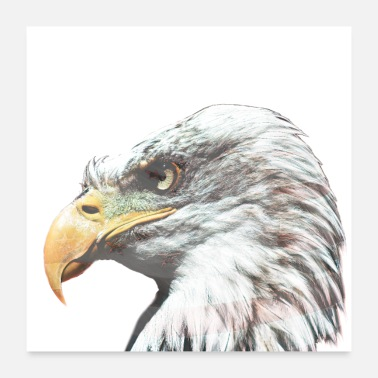 American Bald eagle with American flag - Poster 24 x 24 (60x60 cm)