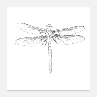 Caterpillar dragon-fly - Poster 24 x 24 (60x60 cm)