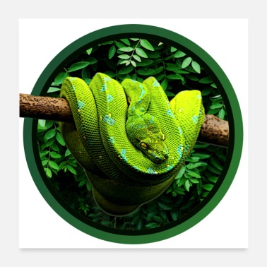 Reptile Green Tree Python Reptile Keeper Chondro Fan - Poster 24 x 24 (60x60 cm)