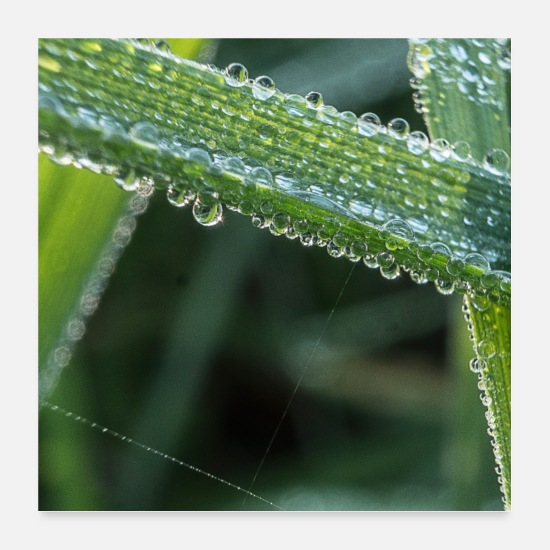Image Posters - Raindrops on a leaf - Posters white