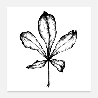 Graphic Art aesculus - Poster 60x60 cm