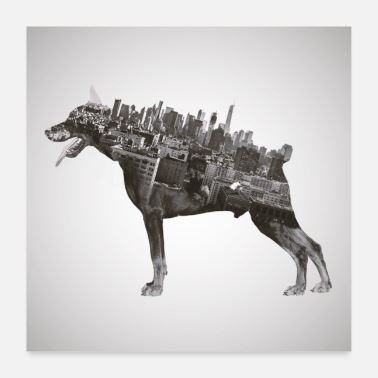 Collections Cool Doberman plakat - Poster