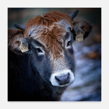 Wild Animal Parks Cow1 1to1 format - Poster