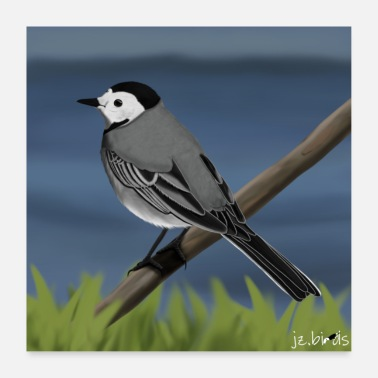 Wagtail Bird Painted Wagtail Bird Design Illustration - Poster