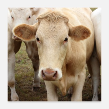 Animal Farmer Cow Cows Cattle Farmer Farmer Gift Poster - Poster