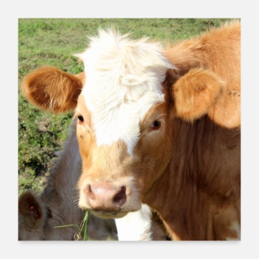 Animal Farmer Cow Cows Beef Cow Vache Farmer Funny Gifts - Poster