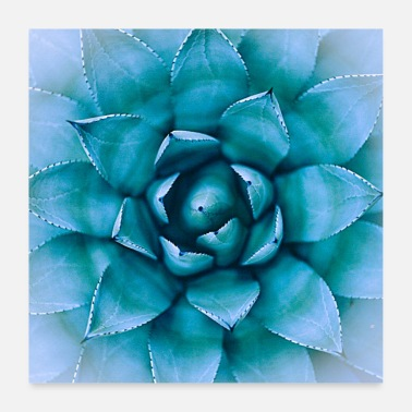 Fauna Plant flower leaves cactus photo - Poster