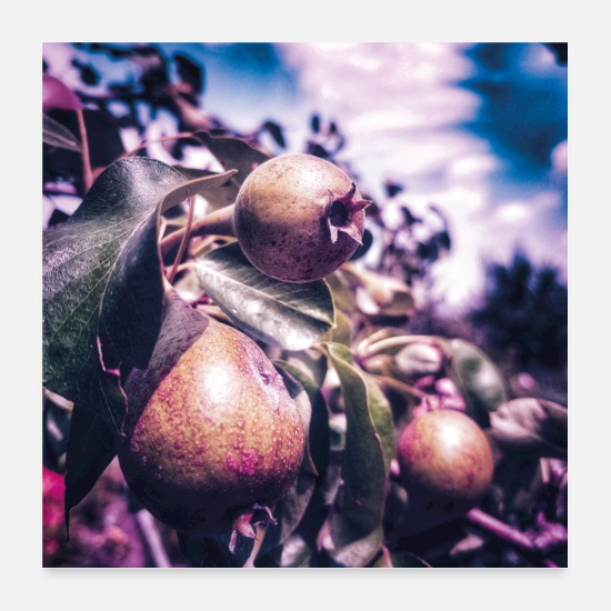 Nature Collection V2 Posters - pears - Posters white