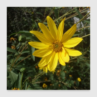Yellow flower poster - Poster 24 x 24 (60x60 cm)