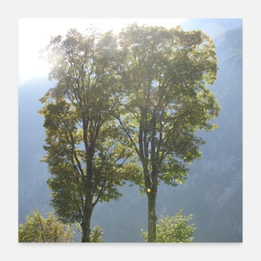 Two Two trees in the sunshine - Poster 24 x 24 (60x60 cm)