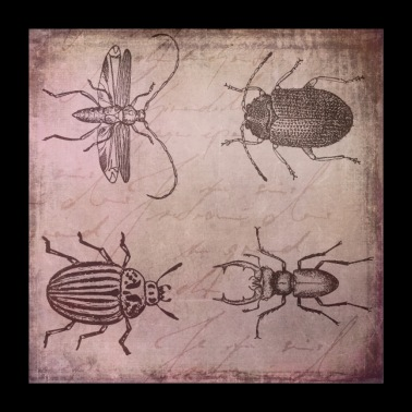 Beetle vintage illustration - Poster 24 x 24 (60x60 cm)
