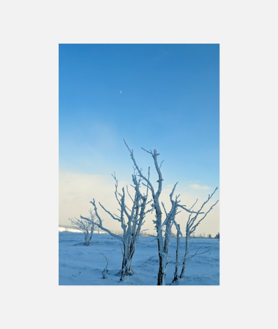 Froid Posters - Arbres dans le givre - Posters blanc