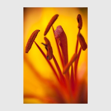 Stamp Orange blossom flower macro stamp - Poster 8 x 12