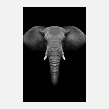 Elephant animal records - Poster 8 x 12 (20x30 cm)