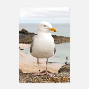 For Her Herring Gull (Larus argentatus) on the beach Herring Gu - Poster