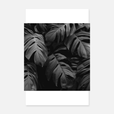Palme monstera black and white - Poster