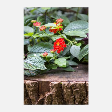 Spanish Lantana or Spanish flag - Poster