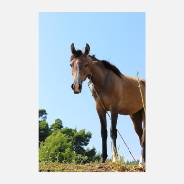 Stallion Horse horses riding equestrian poster gift - Poster