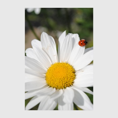 Sweet cute ladybug on flower - Poster 8 x 12