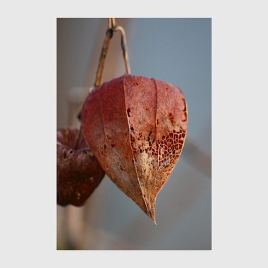 Physalis in winter - Poster 8 x 12