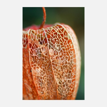 Physalis in de winter - Poster 20x30 cm