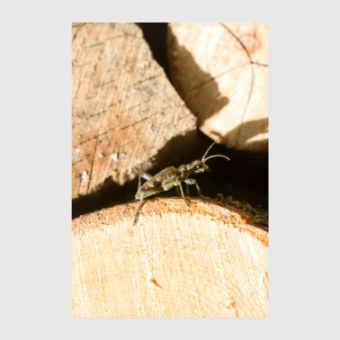 Small insect on wood - Poster 8 x 12