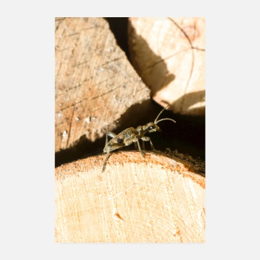 Small Small insect on wood - Poster 8 x 12