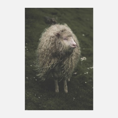 Hippie The Hippie Sheep from the Faroe Islands - Poster 20x30 cm