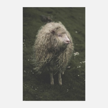 Instagram The Hippie Sheep fra Færøerne - Poster