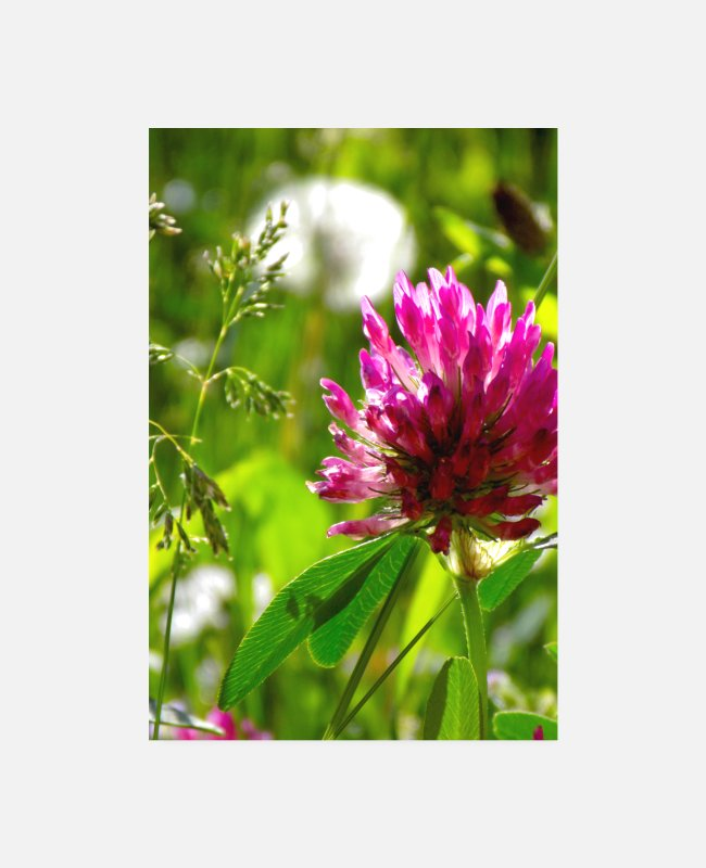 Nature Posters - Spring - Posters white