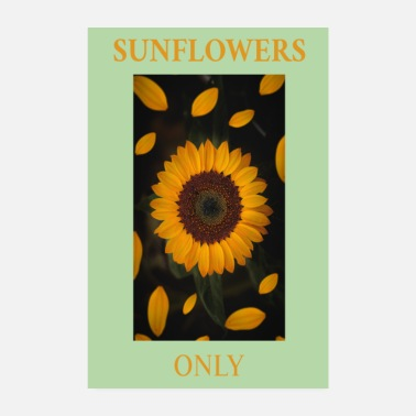 Only Sunflowers Only Sonnenblumen - Poster