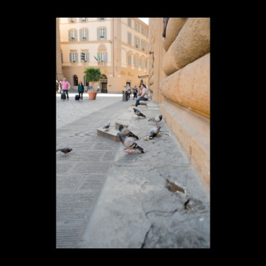 Pigeons of Florence Italy - Poster 8 x 12