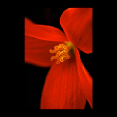 Orange blossom macro - Poster 8 x 12