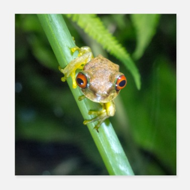 Tree Duellmanohyla rufioculis - Rusty eye frog - Poster 20x20 cm