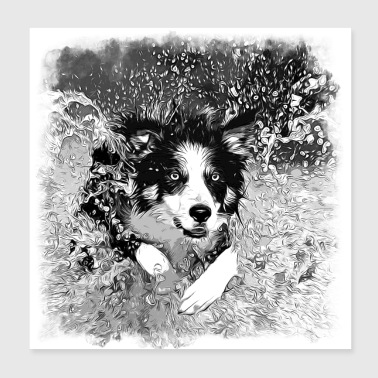 gxp border collie jumps in the water vector sw - Poster 20x20 cm